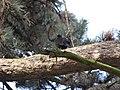 Botanic Garden - Cluj Napoca (2439421452).jpg