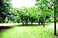 Botanic garden limbe52.jpg