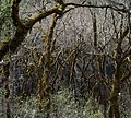 Bothe-Napa Valley State Park (01799)a.jpg