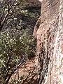 Boynton Canyon Trail, Sedona, Arizona - panoramio (79).jpg