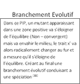 Branchement evolutif.png