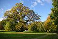 Branitzer Park 02.jpg