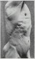 Braus 1921 101.png