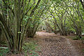 Bridleway at Lower Beeding, West Sussex, England.jpg
