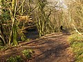 Bridleway by the Teign - geograph.org.uk - 1774034.jpg
