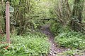Bridleway into Eggesford Forest - geograph.org.uk - 171320.jpg