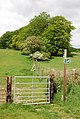 Bridleway to Brockham (woods) - geograph.org.uk - 439414.jpg