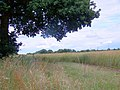 Bridleway to the A34 - geograph.org.uk - 884233.jpg