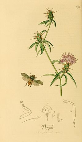 British Entomology Volume 7 (John Curtis) Plate676.jpg