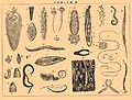 Brockhaus and Efron Encyclopedic Dictionary b16 868-2.jpg