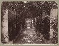 Brogi, Carlo (1850-1925) - n. 10409 - Isola di Capri - Albergo Pagano - Pergolato.jpg