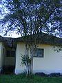 Bromélia em frente a casa antiga.jpg