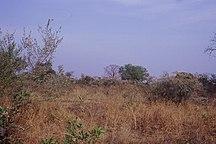 Mali-Morfologia e Idrografia-Brousse Mali