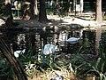 Bucuresti, Romania, Parcul Cismigiu; B-II-a-A-19655 (Lacul Lebedelor 10).JPG