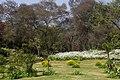 Buddha Jayanti Park - panoramio (1).jpg