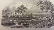 Buffalo 1813