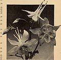 Bulbs and seeds for fall 1937 (1937) (20426304491).jpg