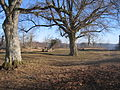 Burg Achalm Trees and Picnic Table.jpg