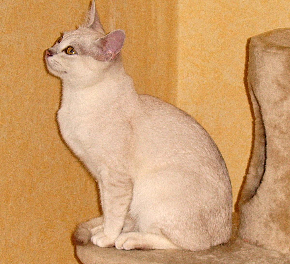 Kat  Wikipedia
