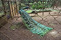 Burung Merak ( Peacock Bird ) inside the cage 2.jpg