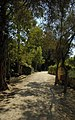 Buskett Woodlands.jpg