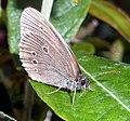 Butterfly (2656063930).jpg