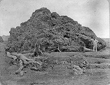 1883 eruption of Krakatoa - Wikipedia