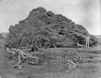 1883 eruption of Krakatoa - Coral block (c. 1885) thrown onto the shore of Java after the eruption