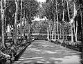COLLECTIE TROPENMUSEUM Weg met bomen naar tempelcomplex Borobudur TMnr 10015737.jpg