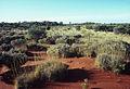 CSIRO ScienceImage 1771 Australian Landscape.jpg