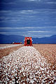 CSIRO ScienceImage 406 Cotton Fields.jpg