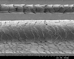 CSIRO ScienceImage 8115 Capelli umani e lana Merino fibre.jpg