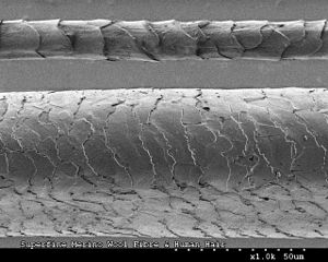 Merino - Australian Merino wool fibre (top) compared to a human hair (bottom), imaged using scanning electron microscopy