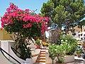Cala Fornells Mallorca.jpg