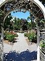 California State Capitol Park World Peace Rose Garden 3.jpg