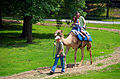 Camelus dromedarius -Tulsa Zoo, Oklahoma, USA -camel ride-8a.jpg
