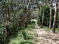 Camino a Zamurera.jpg