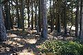 Campground Zero (2766282897).jpg