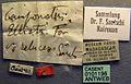 Camponotus ellioti relucens casent0101196 label 1.jpg