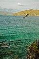 Caneel Bay Turtle Point Trail Pelican Watching 2.jpg