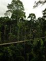 Canopy walkway, Kakum Nationalpark 1.jpg