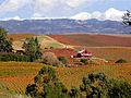 Carneros Vineyards.jpg
