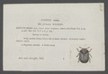 Cassida - Print - Iconographia Zoologica - Special Collections University of Amsterdam - UBAINV0274 036 20 0007.tif