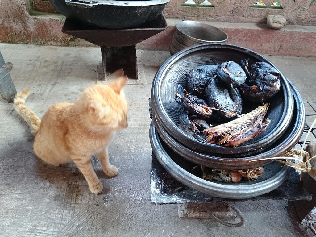 File cat watch keeping fish in ayowa wikimedia for Keeping fish