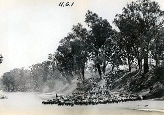 Drover (Australian) - A mob of cattle crossing the MacIntyre River from Queensland to New South Wales