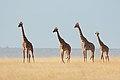 Celebrate Diversity! (Kenya, Day 1).jpg