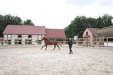 centre equestre 59
