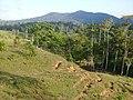 Cerro el Caldero, vista desde la comunidad del Guacimito. - panoramio.jpg