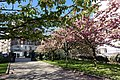 Cherry blossoms @ Parc Georges Brassens @ Paris (33145939573).jpg