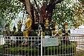 Chiang Mai-36-Wat Phra Dhat Doi Suthep-Bodhi-Baum-1976-gje.jpg